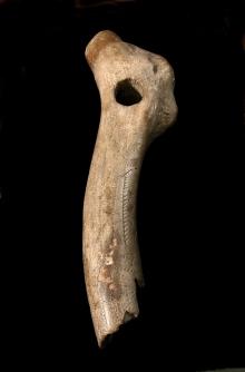 Zdobiony przedmiot rytualny z poroża jelenia wydobyty z Odry w Szczecinie-Podjuchach, środkowa epoka kamienia, 34,6 cm, fot. G. Solecki/A. Piętak
